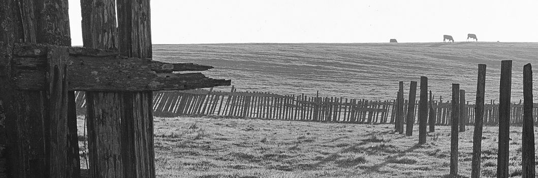 Ansel Adams campus meadow with cows and ranch fencing
